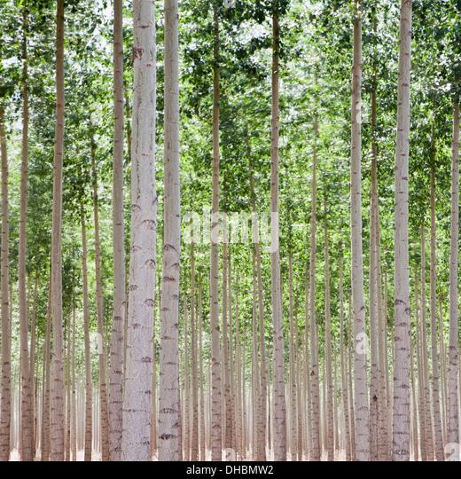 pendleton stock photos  u0026 pendleton stock images