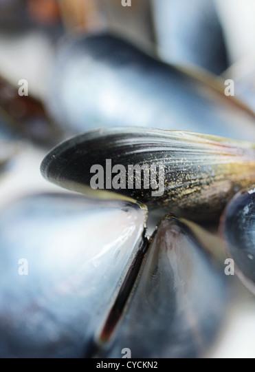 mussel - Stock-Bilder