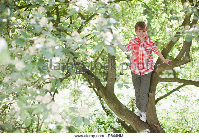 Boy climbing tree outdoors - Stock Image