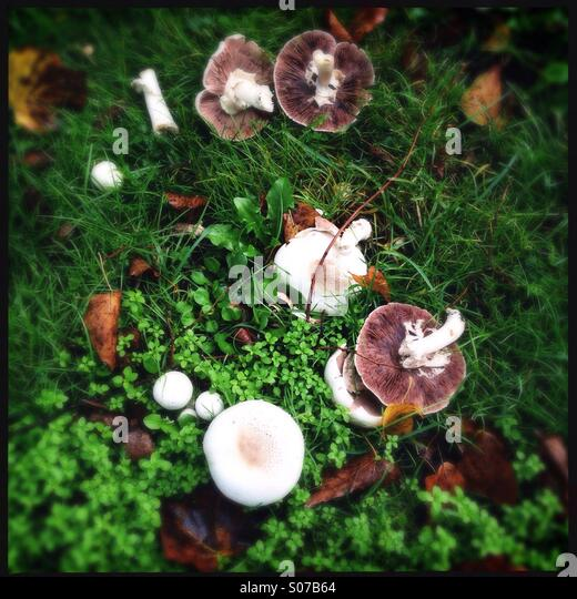 Wild mushrooms - Stock Image