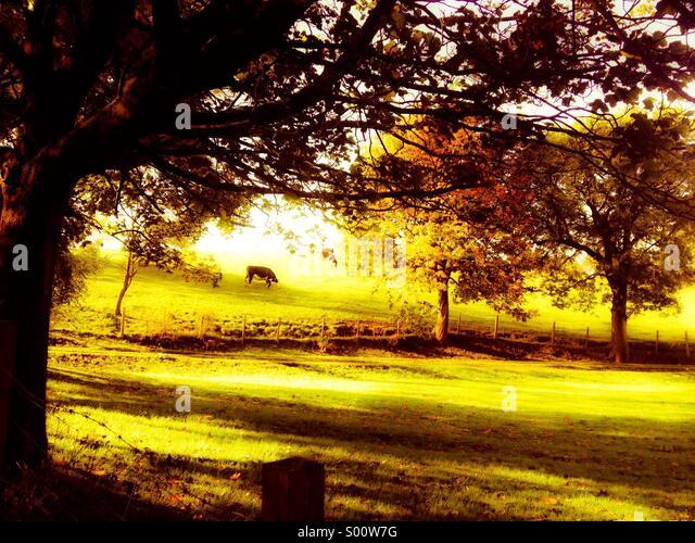 Evening Glow - Stock Image
