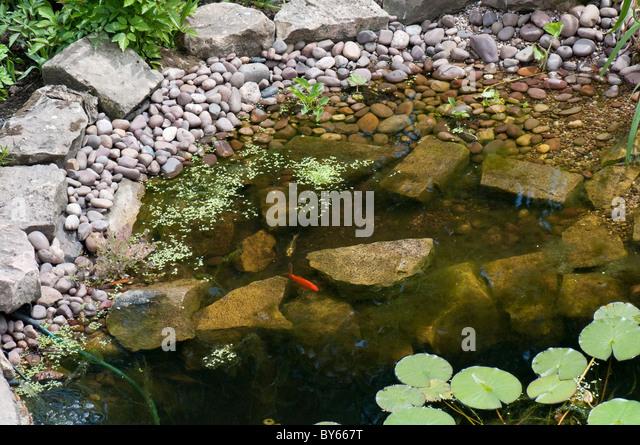 Small garden pond stock photos small garden pond stock for Tiny garden pond