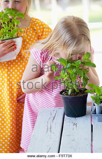 Finland, Girls (8-9) smelling tomato seedlings and mint plant - Stock Image