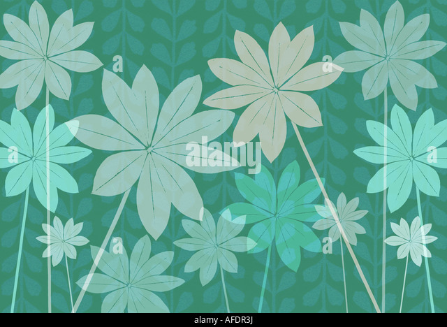 Illustration of lupin foliage - Stock Image