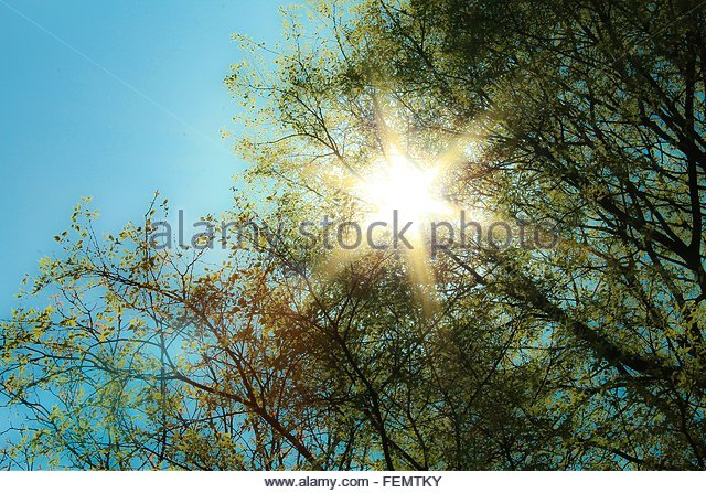 Low Angle View Of Sunlight Steaming Through Trees Against Sky - Stock Image
