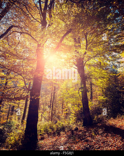 Retro stylized picture of autumnal forest. - Stock-Bilder