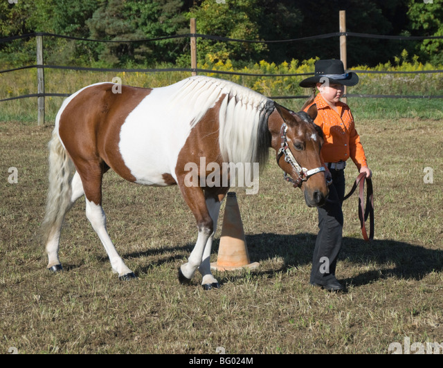 Young girl wearing a cowboy hat competing in a halter class at a horse show. - Stock Image