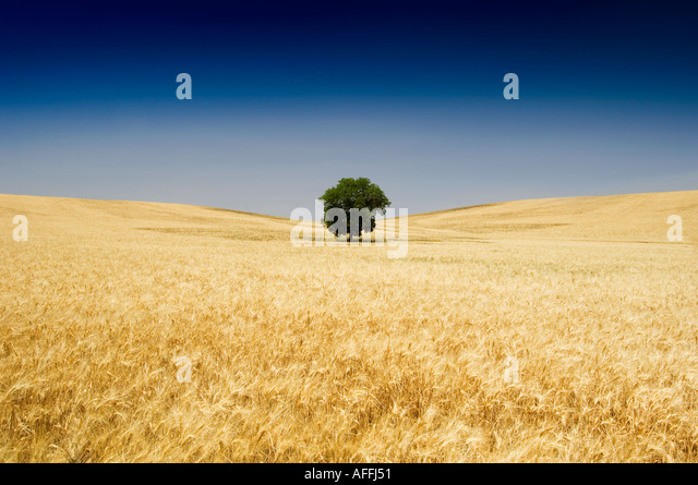 Rolling farm land at Setenil near Ronda Andalucia Spain Europe - Stock Image