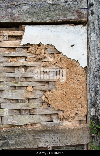 Original sixteenth-century wattle and daub on an old cottage in Herefordshire, UK. The wattle consists of split - Stock Image