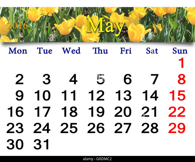 calendar for May 2016 with flower bed of yellow tu - Stock Image