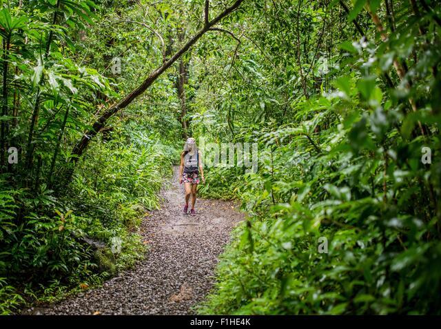 Young female tourist strolling in jungle,  Manoa Falls, Oahu, Hawaii, USA - Stock-Bilder