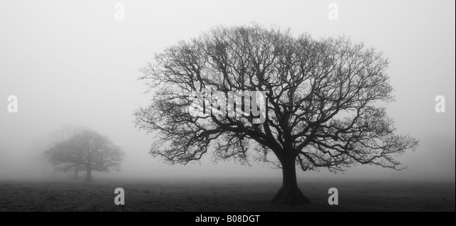 Misty morning in a tree lined field, Black Dog, Mid Devon, England - Stock Image