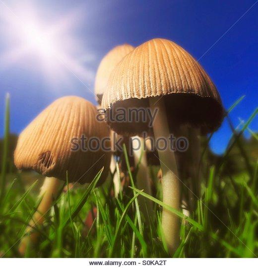 Toadstools in the Garden - Stock Image