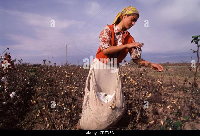 Young Tajik girl picking cotton along Tajikistan highway A385 100km southeast of Dushanbe. - Stock Image
