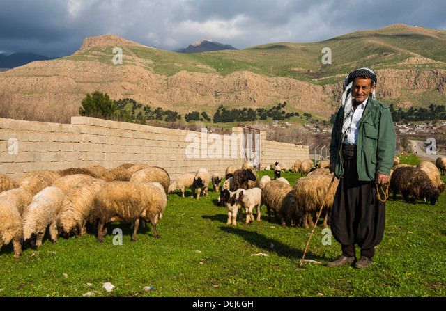 Shepherd with his herd of sheep in Ahmedawa on the border of Iran, Iraq Kurdistan, Iraq, Middle East - Stock Image