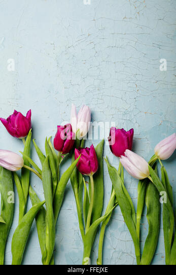 tulips on old backlground, flowers top view - Stock Image