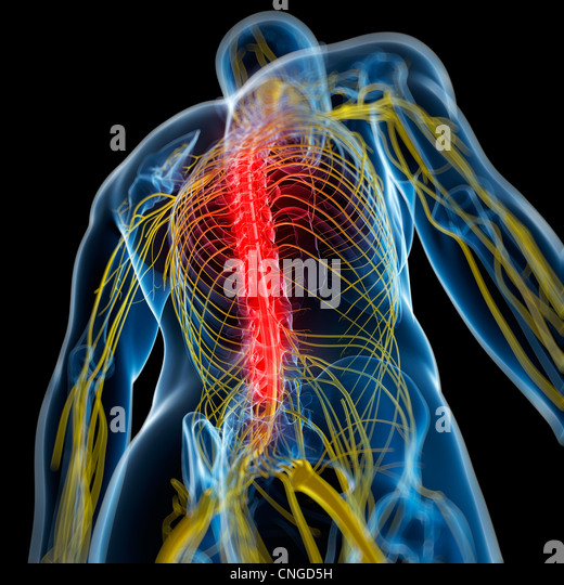 Back pain  conceptual artwork - Stock Image