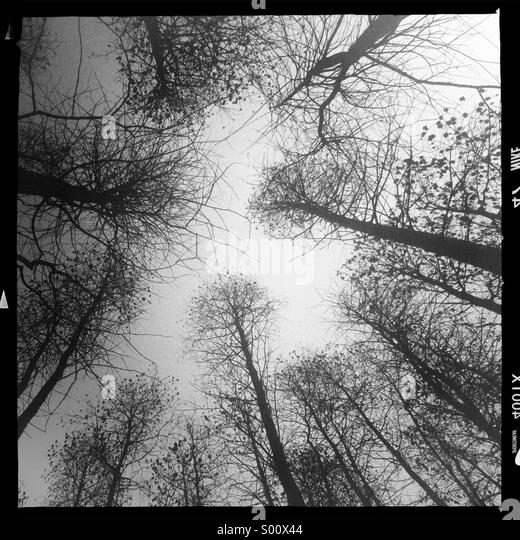 Foggy forest - Stock Image