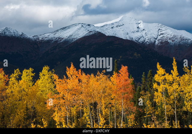 Autumn colours of the boreal forest in the Stewart River valley, Yukon Territories, Canada - Stock Image