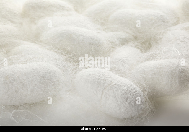 Closeup on cocoons texture - Stock Image