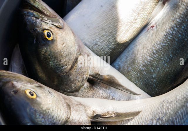 Bluefish stock photos bluefish stock images alamy for Jack in the box fish