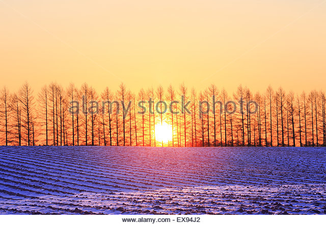 Japan, Hokkaido, Kamishihoro, Sun rising behind trees at tokachi plains. - Stock Image