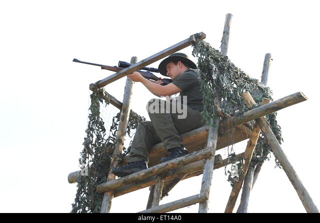 A Hunter with rifle shooting on a high seat - Stock Image