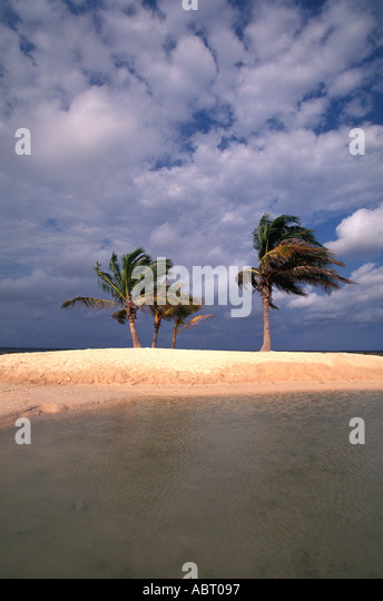 TROPICS Deserted romantic island with two palm trees early in the morning - Stock Image