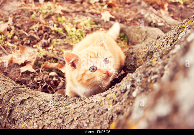 kitten looking up a tree - Stock Image