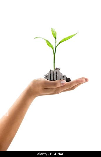 plant in hand - Stock-Bilder