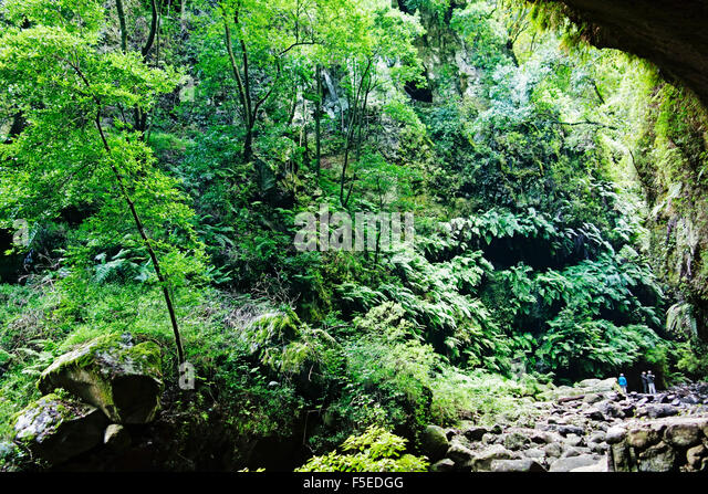 Laurel forest, Los Tilos Biosphere Reserve, La Palma, Canary Islands, Spain, Europe - Stock-Bilder