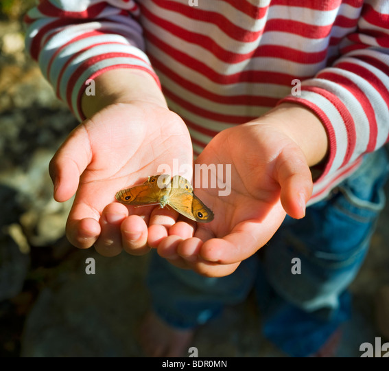 small butterfly in child hands - Stock Image
