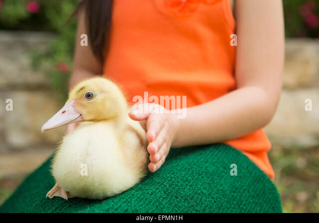 A child with a duckling on her lap. - Stock-Bilder