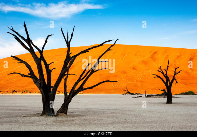 Trees and red dunes in Dead Vlei, Sossuslvei, Namibia; Concept for travel in Africa - Stock-Bilder