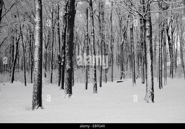 Woods in winter - Stock-Bilder