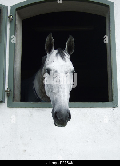 A horse looking out of the stable barn window - Stock Image