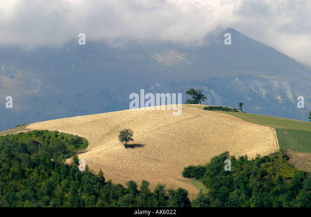 Harvest time in LE  MARCHE  Italy a field of corn against a backdrop of the Mountains in the Sibillini  National - Stock Image