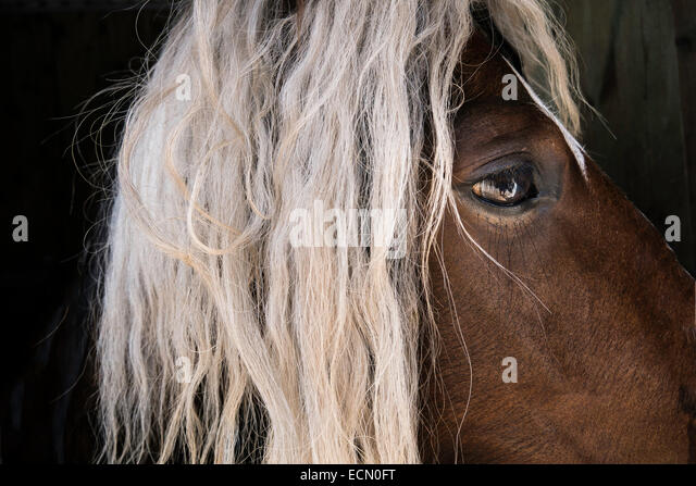 long manes stock photos - photo #12