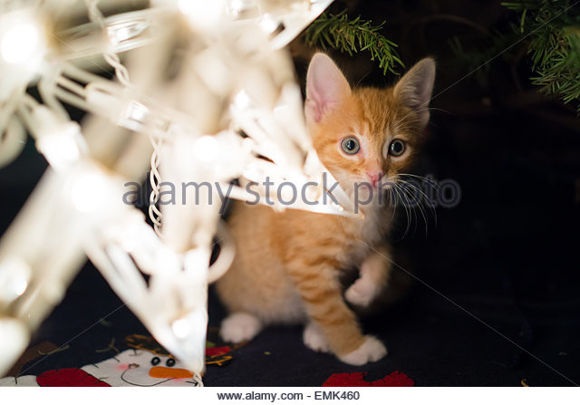 Cat under christmas tree - Stock Image