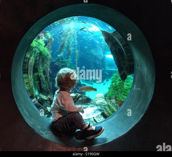 At the aquarium - Stock-Bilder