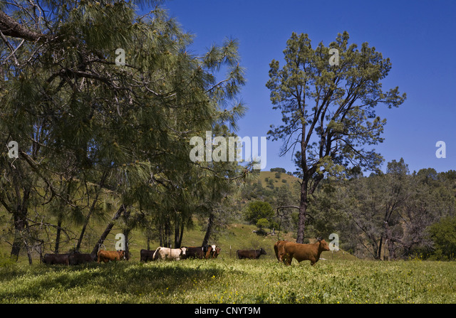 Cattle feedlot america stock photos cattle feedlot for Coastal farm and ranch ad