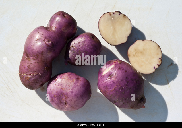 Purple-skinned Arran Victory potatoes just  harvested - Stock Image