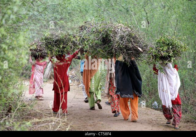 Women carrying collected firewood on her heads, Uttar Pradesh, India - Stock-Bilder