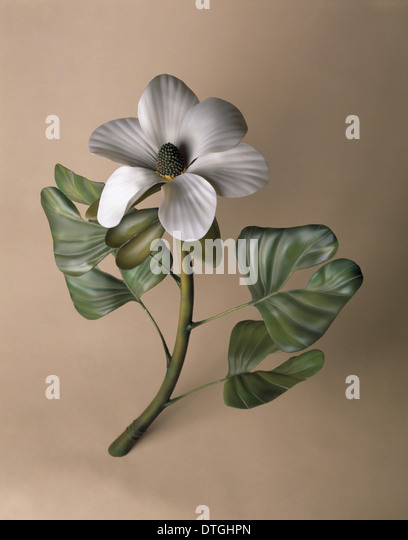 Early flowering plant model - Stock Image
