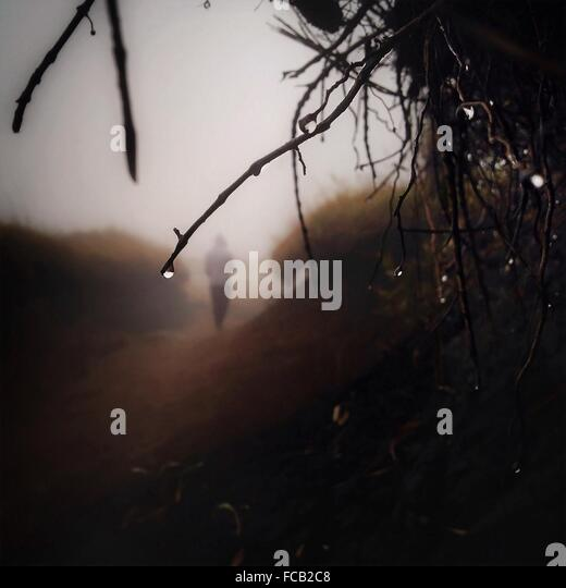 Close-Up Of Wet Twigs - Stock Image