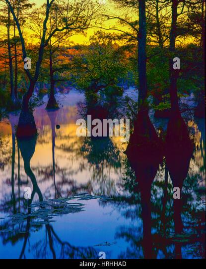 Autumn Morning Fog in Cypress Swamp, Merchants Millpond State Park, North Carolina - Stock-Bilder