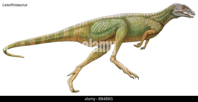 Lesothosaurus, 'Lesotho lizard,' early Jurassic dinosaur. This tiny herbivore was built lightly due to its - Stock Image