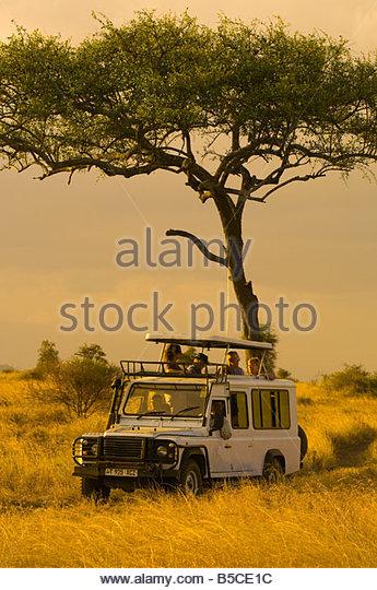 Tourists on safari peer out of the pop up roof of a safari vehicle Serengeti National Park Tanzania - Stock Image