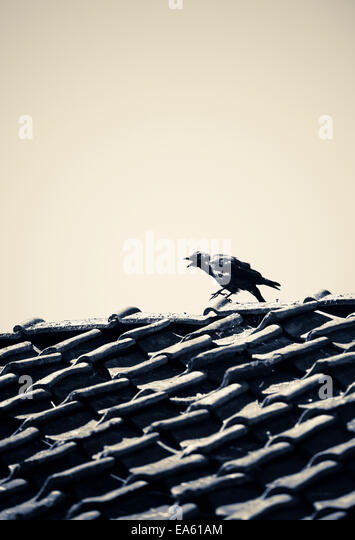 Bird sitting on rooftop of old  house with dark, mysterious and moody setting. - Stock Image