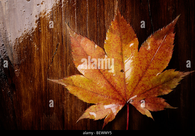 fall concept, selective focus center of image, special toned photo f/x - Stock-Bilder